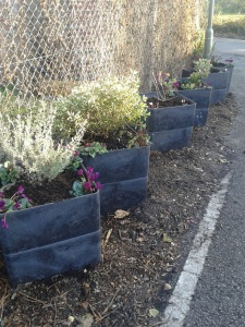 New planters outside the Trading Hut, Nov 2013