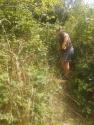 Amber clearing brambles