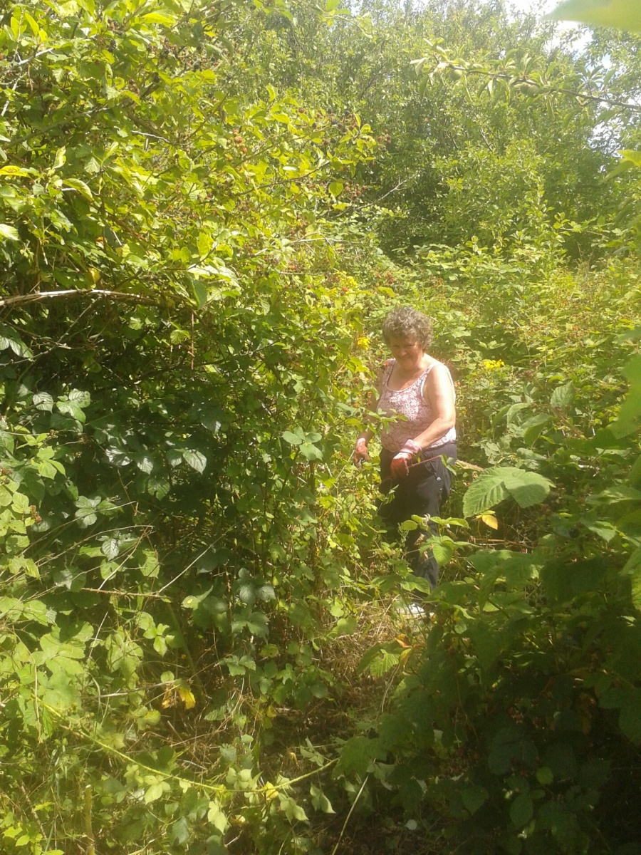 Jane clearing brambles