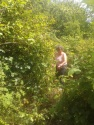 Jane clearing brambles